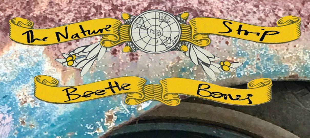 Beetle Bones – out September 1!